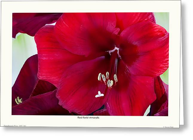 Red Florist Amaryllis Greeting Card by Saxon Holt