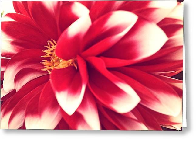 Red Flower Greeting Card by Beril Sirmacek