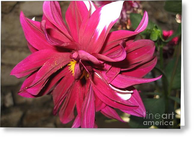 Red Flower In Bloom Greeting Card