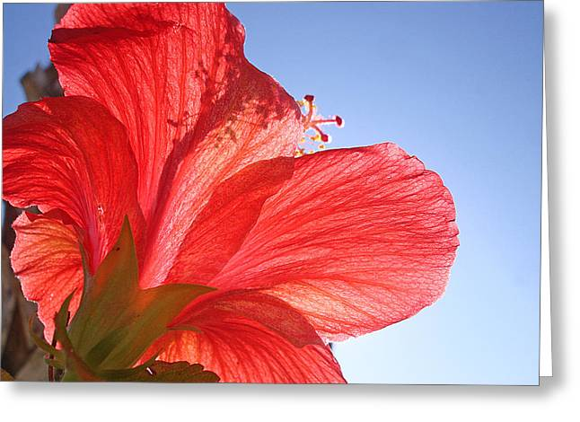 Red Flower In The Sun By Jan Marvin Studios Greeting Card