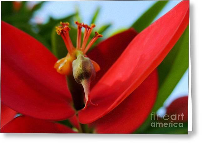 Red Flower Greeting Card by Kristine Merc