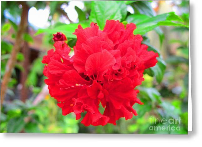 Red Flower Greeting Card by Sergey Lukashin