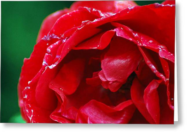 Greeting Card featuring the photograph Red Flower Wet by Matt Harang