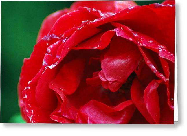 Red Flower Wet Greeting Card by Matt Harang