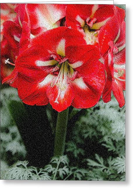 Red Flower With Starburst Greeting Card by Crystal Wightman