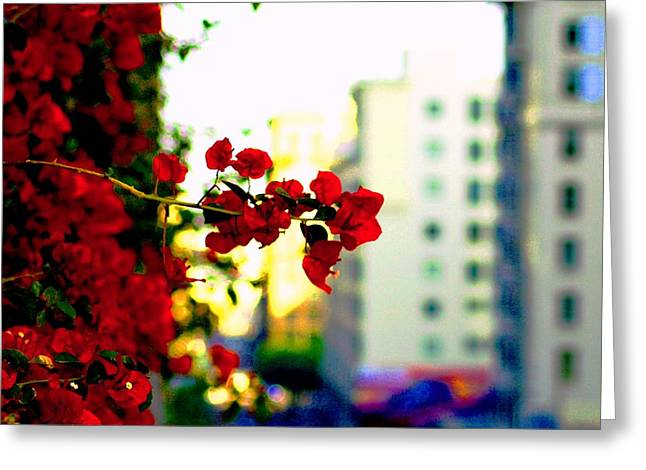 Greeting Card featuring the photograph Red Flowers Downtown by Matt Harang