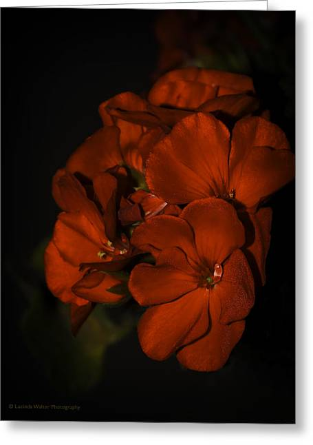 Greeting Card featuring the photograph Red Flowers In Evening Light by Lucinda Walter