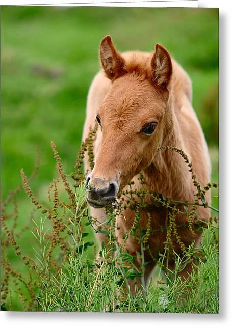 Red Foal. Beautiful Eyes Greeting Card