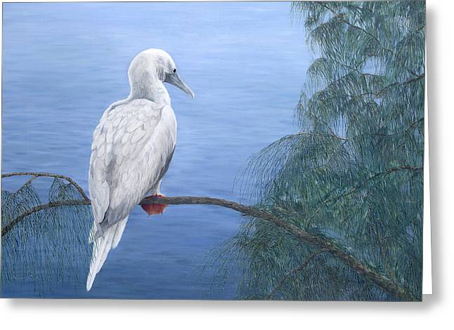 Red-footed Booby Greeting Card by Dorothea Hyde