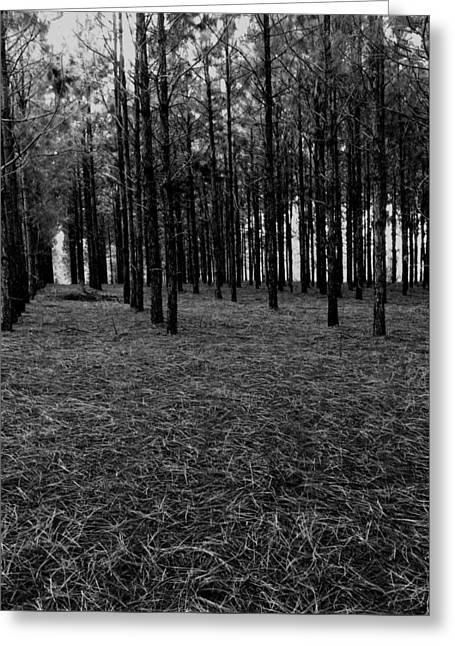Red Forest In Black And White Greeting Card
