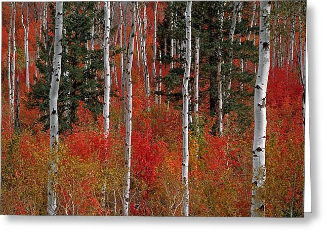 Red Forest Greeting Card by Leland D Howard