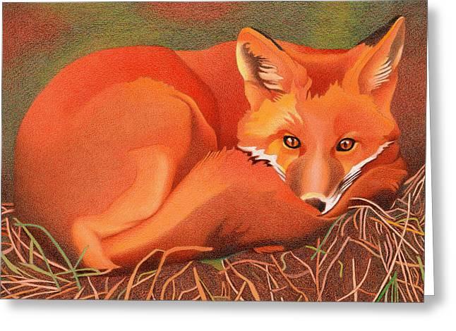 Red Fox Greeting Card by Dan Miller