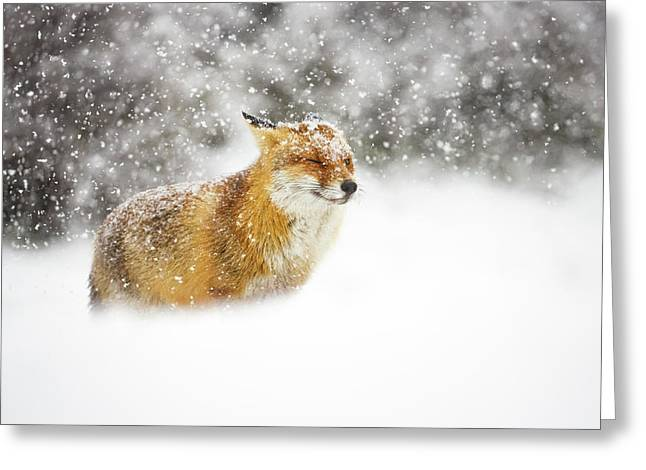 Red Fox In A Heavy Snowstorm Greeting Card