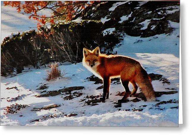 Greeting Card featuring the photograph Red Fox In Winter by Diane Alexander
