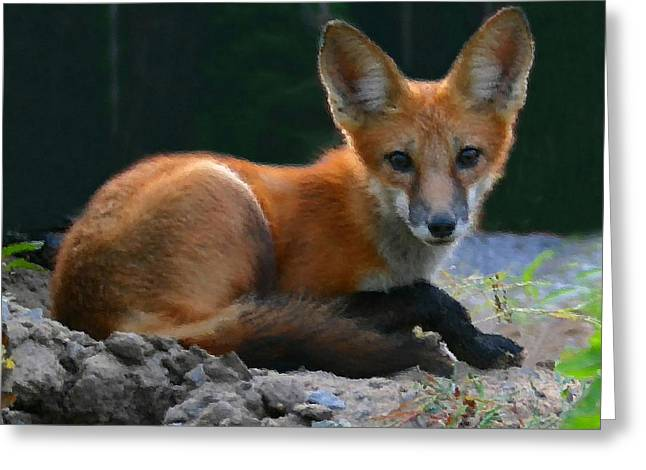 Red Fox Greeting Card by Kristin Elmquist