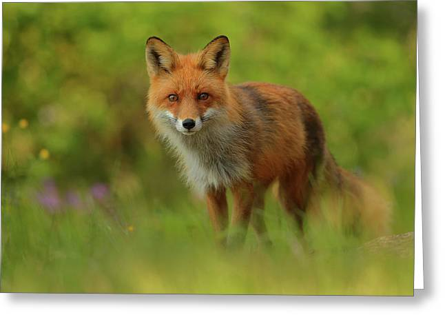 Red Fox Lady Greeting Card by Assaf Gavra