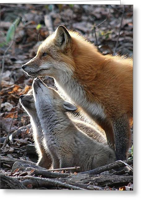 Red Fox With Kits Greeting Card by Doris Potter