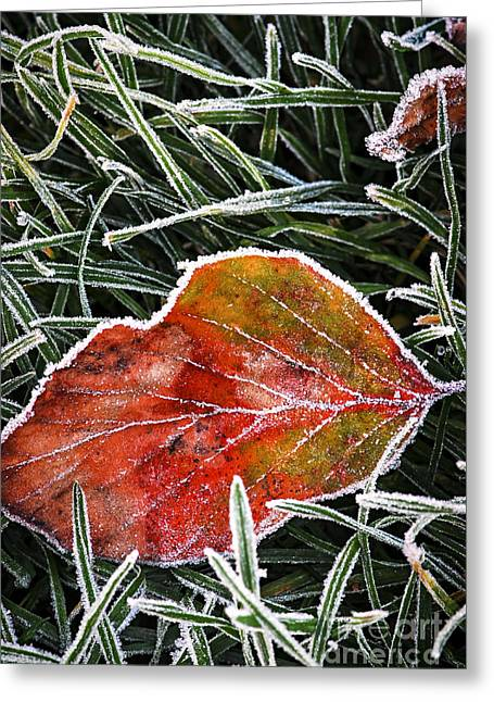 Red Frosty Leaf On Frozen Ground Greeting Card