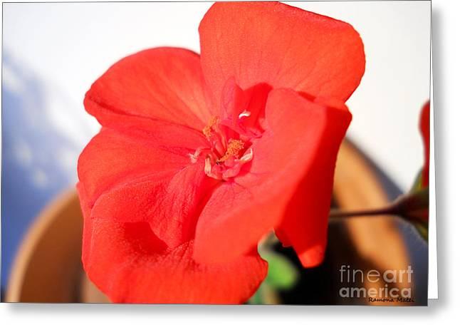 Red Geranium Greeting Card by Ramona Matei