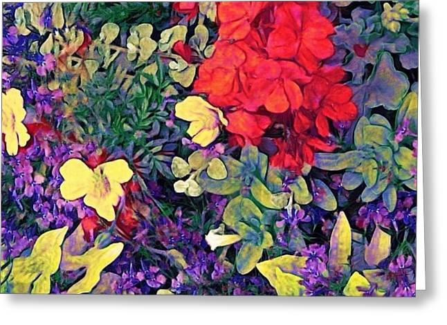 Red Geranium With Yellow And Purple Flowers - Square Greeting Card by Lyn Voytershark
