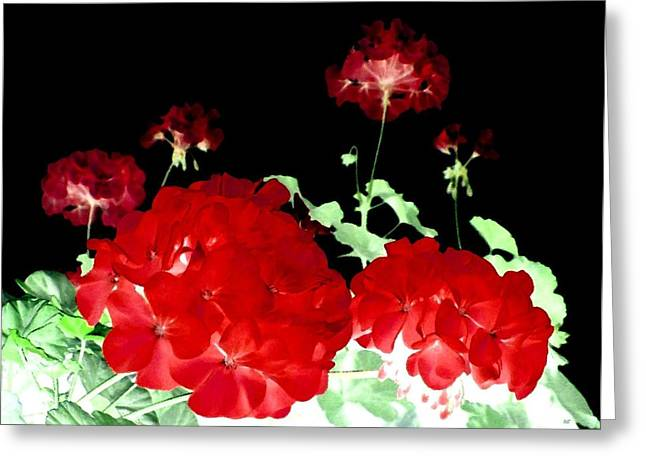 Red Geraniums Greeting Card by Will Borden