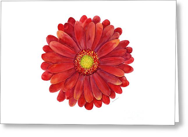 Red Gerbera Daisy Greeting Card by Amy Kirkpatrick