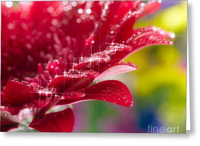 Red Gerbera  Flower Greeting Card by Boon Mee