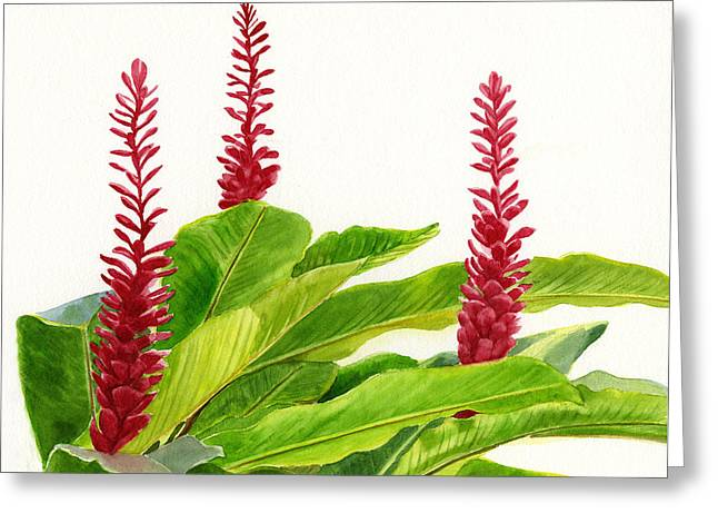 Red Ginger Flowers Greeting Card by Sharon Freeman