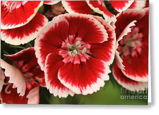 Red Glory All Profits Go To Hospice Of The Calumet Area Greeting Card