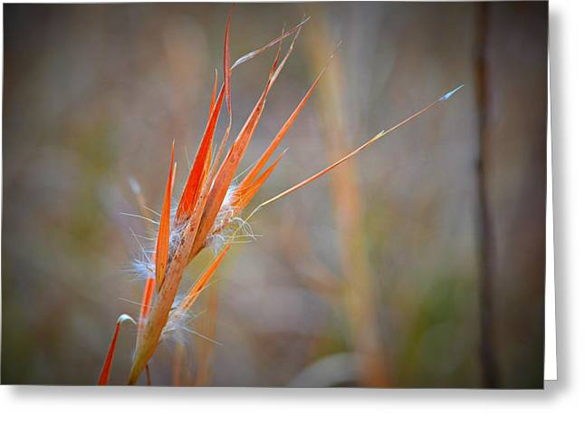 Red Grass Greeting Card by Mary Zeman