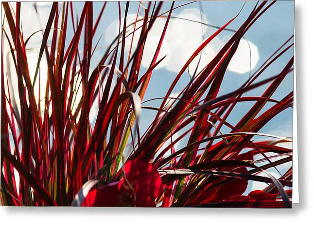 Red Grass White Light 1 - Featured 3 Greeting Card by Alexander Senin