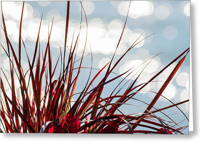 Red Grass White Light 2 - Featured 3 Greeting Card by Alexander Senin