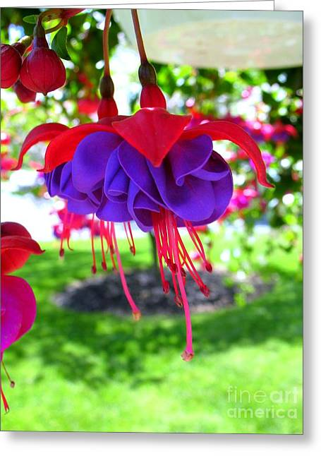Red Hats Greeting Card by Patti Whitten