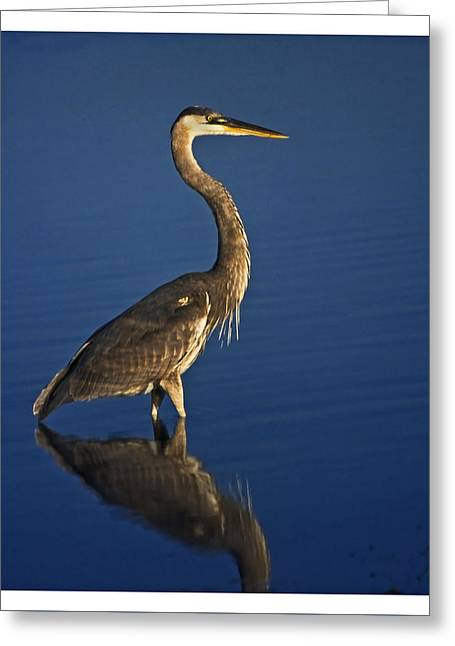 Red Heron Wading Greeting Card