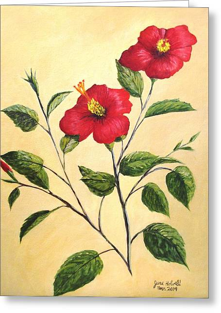 Red Hibiscus Greeting Card by June Holwell
