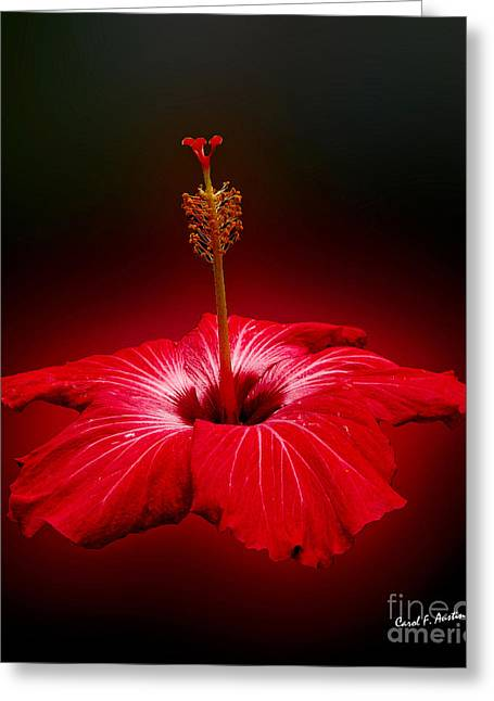 Red Hibiscus Tropical Flower Greeting Card by Carol F Austin