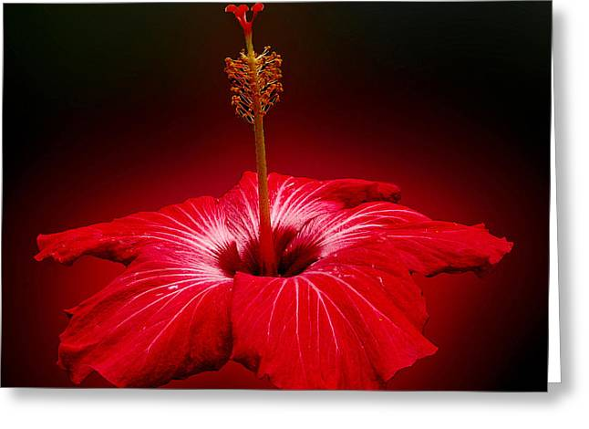Red Hibiscus Tropical Flower Wall Art Greeting Card