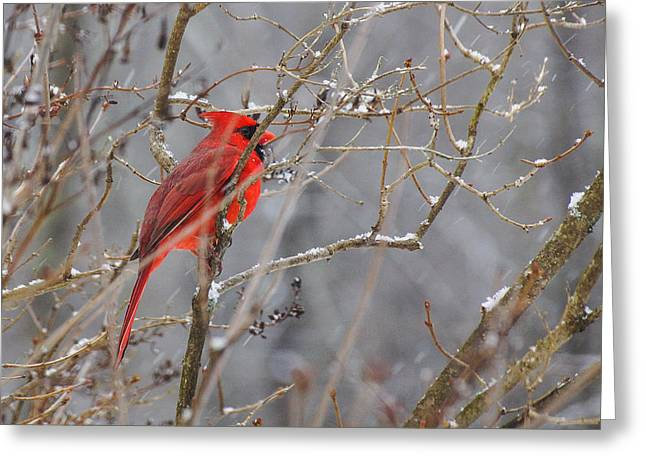 Red Hot In A Snowstorm Greeting Card