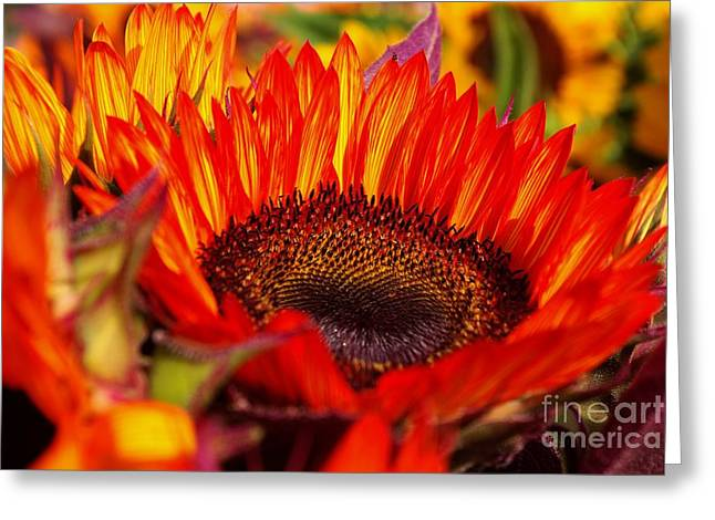 Red Hot  Greeting Card by John S