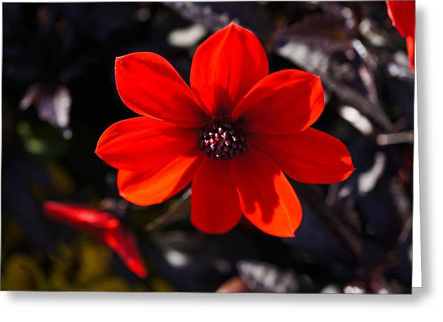 Red II Greeting Card by Ronda Broatch