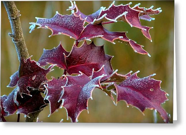 Red In Rime Greeting Card
