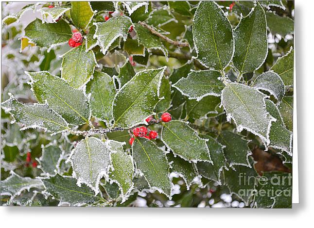Greeting Card featuring the photograph Red In Winter by Felicia Tica