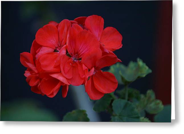 Red Is My Blossom Greeting Card by Thomas D McManus