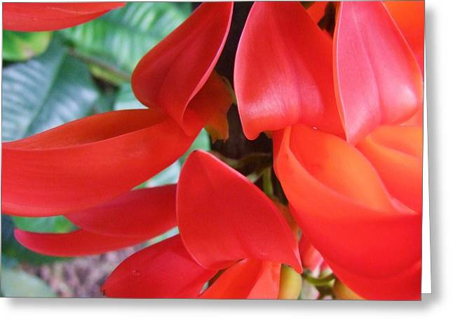 Red Jade Flowers Greeting Card by Mary Deal