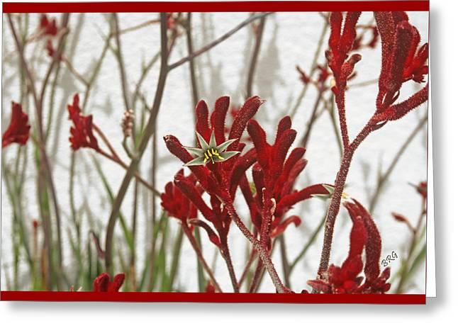Red Kangaroo Paw Greeting Card