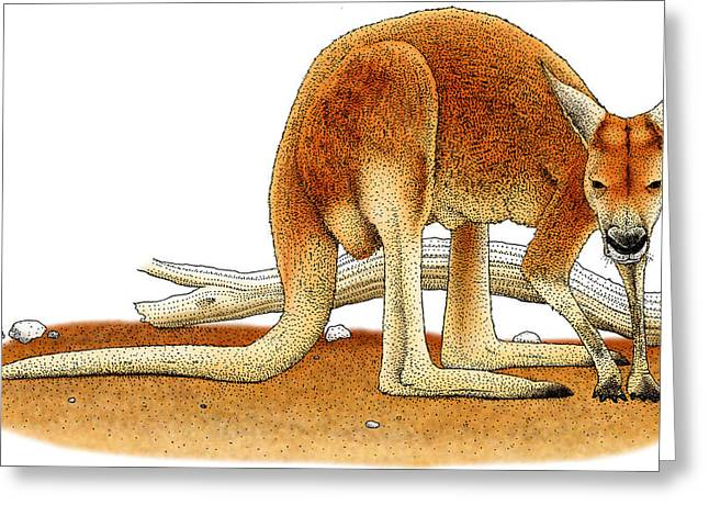 Red Kangaroo Greeting Card by Roger Hall