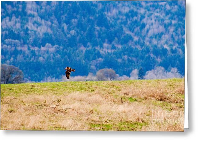 Red Kite In Flight, Oregon Greeting Card