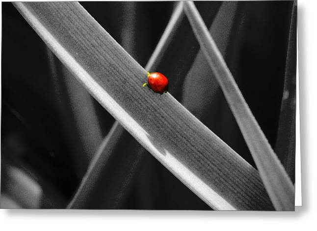 Red Ladybird 2 Greeting Card