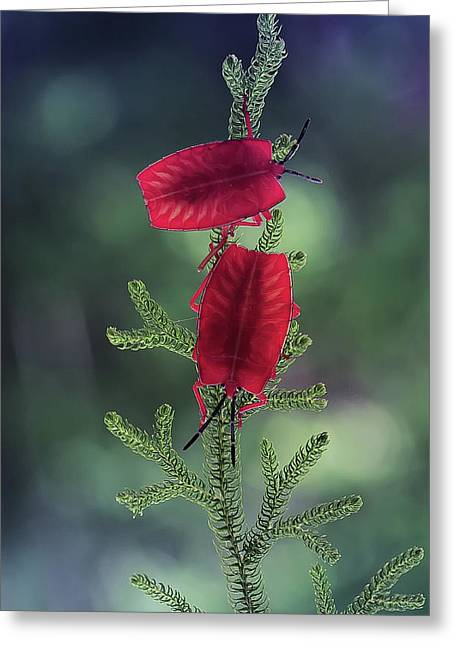 Red Ladybug Greeting Card