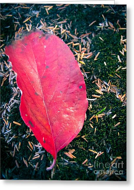 Red Leaf Greeting Card by Colleen Kammerer